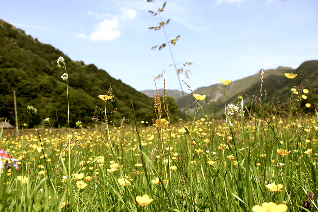 brothers_water_meadow2