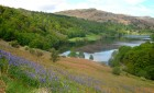 Bluebells above Rydal Water