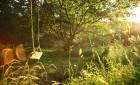 The Tarn House swing